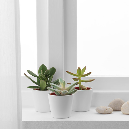 SUCCULENT potted plant with pot
