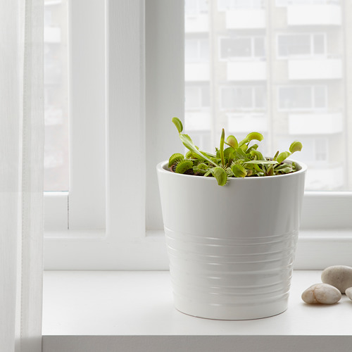 GRÖNSKAN potted plant