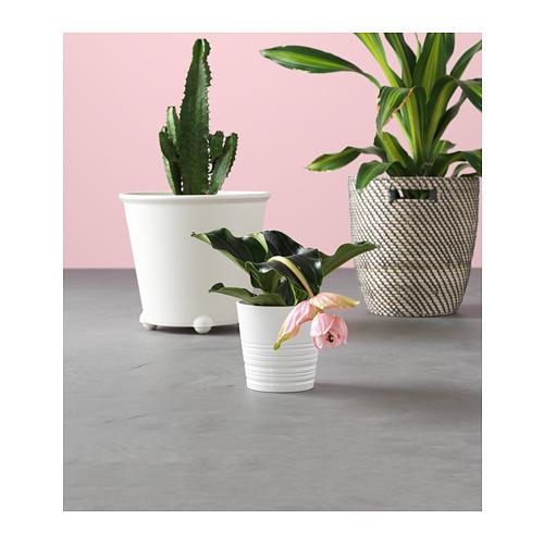 IKEA PS FEJÖ drėkinamasis vazonėlis